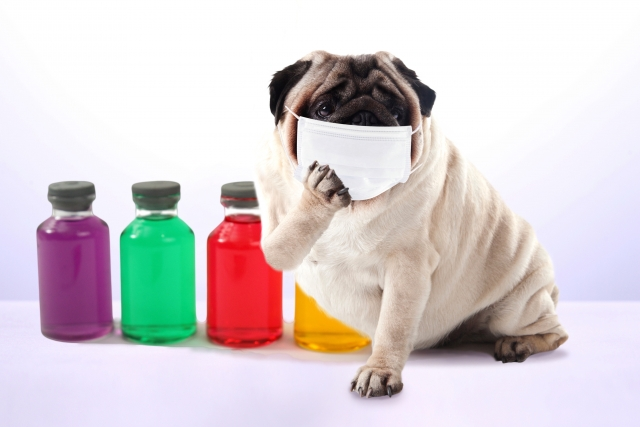 妊娠中には辛すぎる。細菌・ウイルス・黄砂の脅威と治療法